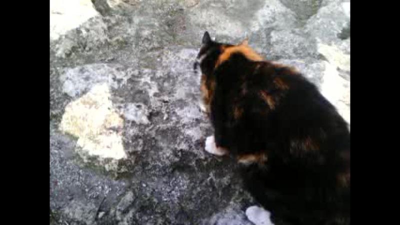 Мангупская кошечка