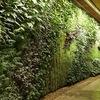 Озеленение интерьеров в г Москва.Компания FLOREN