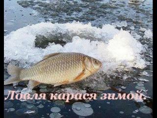 Ловля карася зимой. Карась на мормышку. Река Нура (Маншук). .