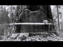Фотографии американских лесорубов 19 век