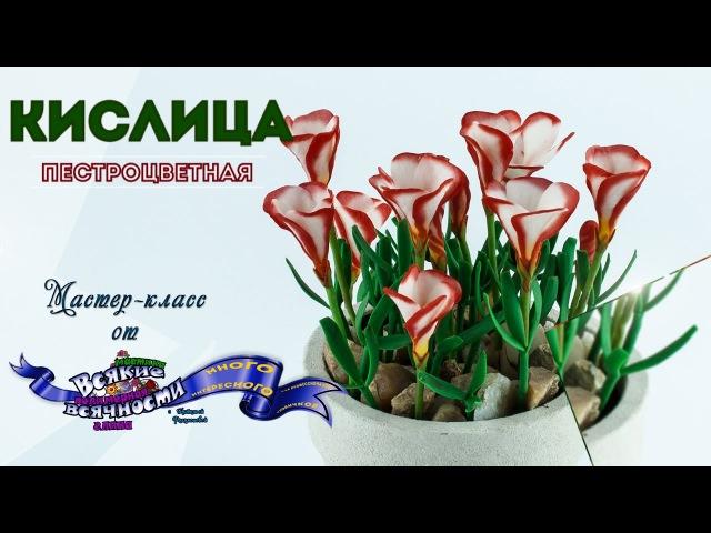 Цветы из мастики и полимерной глины Кислица пестроцветная. Мастер-класс