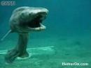 Акула мутант Япония
