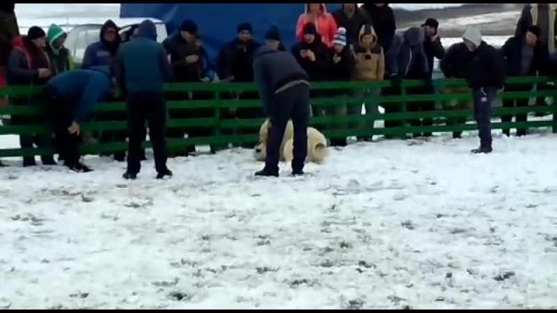 шункар чемпион крыма 2018 г