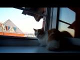 Охота на стрижей. Жаль сетка на окне мешает.