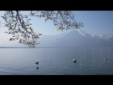 Л.Бетховен _Лунная соната_ - Ludwig Van Beethoven - Moonlight Sonata ( 480 X 854 ).mp4
