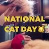 "COSMOPOLITAN KOREA 코스모폴리탄 on Instagram: ""오늘은 바로 냥데이🐱💕세계 고양이의 날입니다. 캣데이를 기념해 #냥집사 스타들을 #코스모 가 모아모아봤어요. GD, 송민호, 설리, 강다니엘, 산다라박, 김유정, 효린, 손담비, 서강준 그리..."