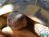 Как черепахи занимаются любовью ) ЗВУК ОБЯЗАТЕЛЬНО!))))