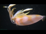 «Самое странное место в океане» (Документальный, природа, животные, 2011)