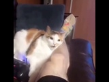 Cat bites owners leg and punts it across the fcking room
