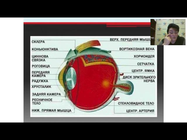Профилактика и реабилитация глазных заболеваний. Вебинар PowerMatrix по продукции от 25.10.2016