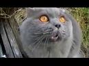 ТАКОГО ОТ НИХ ВЫ НЕ ЖДАЛИ Говорящие и Поющие Коты Лучшая Подборка