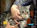 Про виставку котів