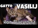 Особенный кот Василий Un gatto speciale - Vasilij