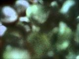 Martin Hayes - Cities &amp Colors (Alec Troniq Blossom)