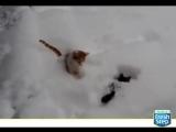 Коты на прогулке