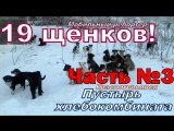 М.Репортер за 5.01.18 19 щенков ЧАСТЬ№3