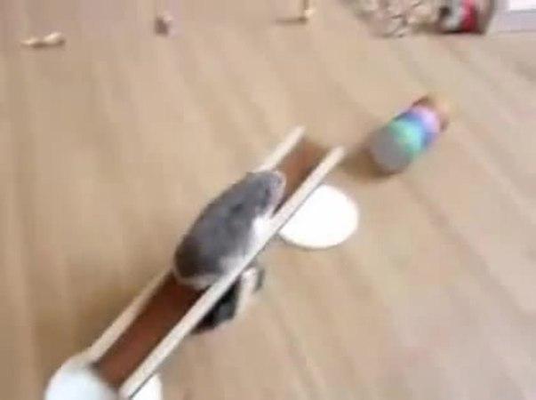 бегущий хомяк3 - running hamster3