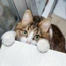 Кошке Рекси 3 года, и когда дело доходит до выражения эмоций…