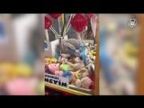 Самые милые эпизоды с животными за 2017 год в одном видео