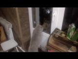 Открой мне дверь,Говорящий кот😂😂😂