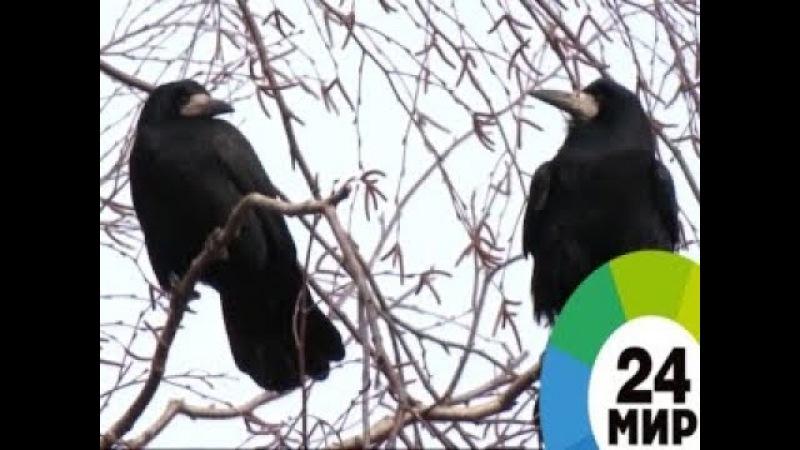 Мартовское утро в дикой природе - МИР 24