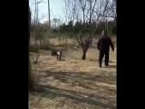Коты-убийцы)