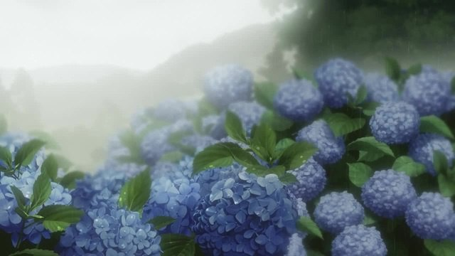 Hydrangea on rain from Sankarea