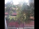 Черепаха Биси, парк храма Конфуция