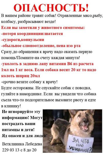 Отравление собак реагентами