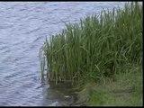 В реке Осколец обнаружили тело утонувшего мужчины