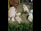 gef_latinos video