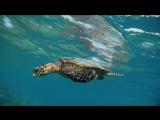 Фридайвинг с черепахой на Мальдивах