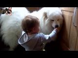 Кошки и Собаки которые любят детей - Сборник
