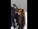 медведь по имени димасик