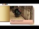 Животные.Как говорят животные звуки животных.Развивающее видео для детей. Раннее развитие. Карточки Домана.