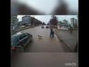 Чоткий пёс-пешеход у Восхода