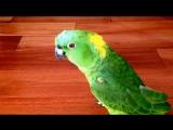 Попугай смеётся