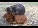 Смешные видео про кошек до слез Смешные кошки и коты 2018 2 Кошки Без монтажа