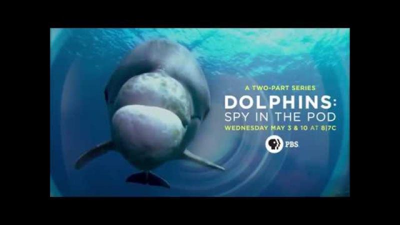 BBC Дельфины скрытой камерой Дельфины Шпион в стае Dolphins Spy In The Pod 2014 трейлер