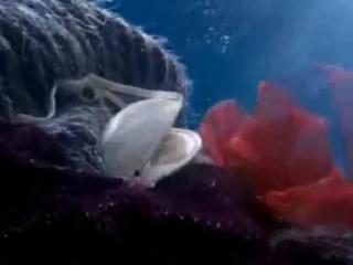Реклама ariston aqualtis подводный мир (underwater world tv commercial)