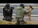 Police K-9 Unit S.W.A.T. Team Special Training Dogs K9