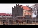 конезавод-георгенбург-г-черняховск-калининградская-область-uklip-scscscrp