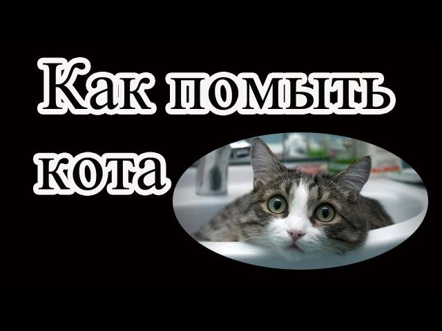 Как помыть кота советы интересные факты Интересные факты о кошках