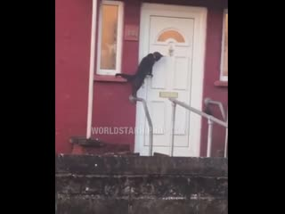 This cat got locked out so he knocked on the door!