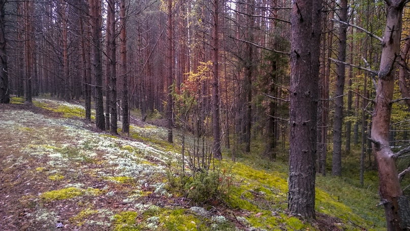 Борода святого Пантелеймона и еще 326 видов растений в Сольвычегодском заказнике., изображение №21