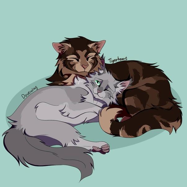 Коты воители голубка и шмель картинки начало отношений