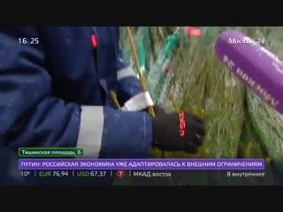 Где в Москве купить лучшую елку