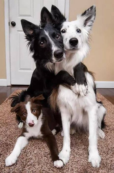 Семейное фото :)