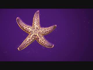 Желаем почаще смотреть на звезды!