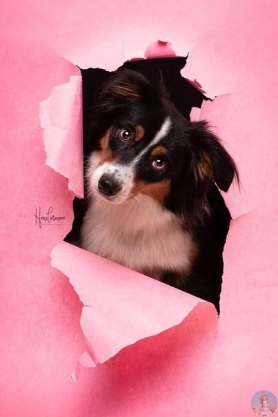Милая фотосессия собак